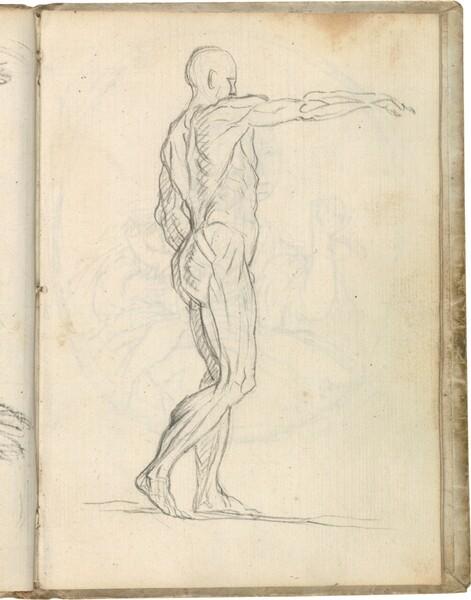 Écorché (Estudio de figura masculina desollada) según Jean-Antoine Houdon