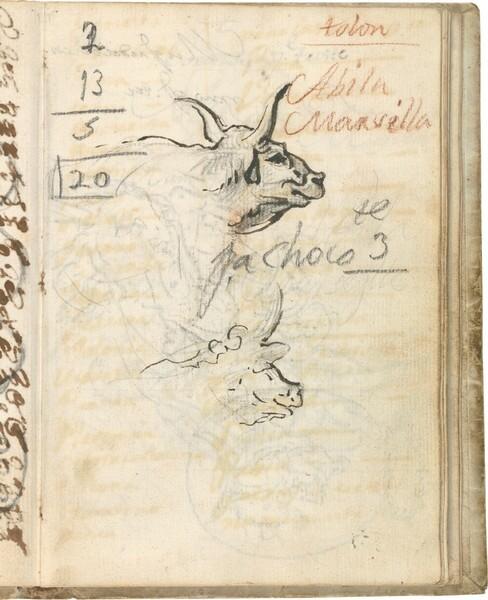 Estudios de cabeza de búfalo de la Maremma para la alegoría del río Po